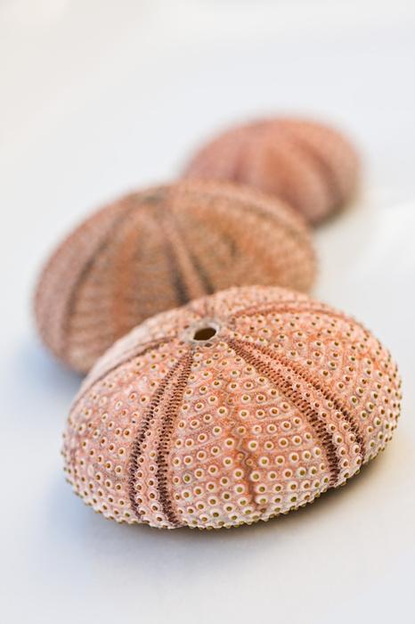 5605sea_urchin