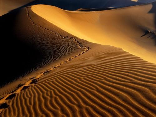 Footprints,_Namib_Desert,_Namibia,_Africa